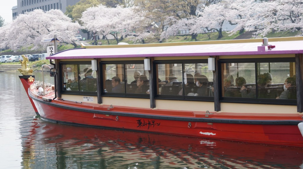2013sakura-ue04